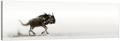 Blue Wildebeast In Desert Canvas Art Print