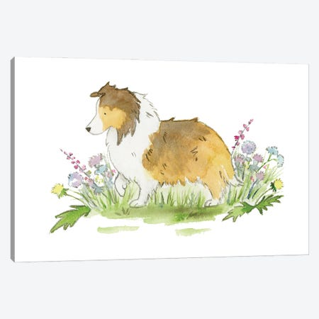 Willow The Sable Shetland Sheepdog Canvas Print #JSY105} by Jasper And Ruby Canvas Wall Art
