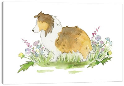 Willow The Sable Shetland Sheepdog Canvas Art Print