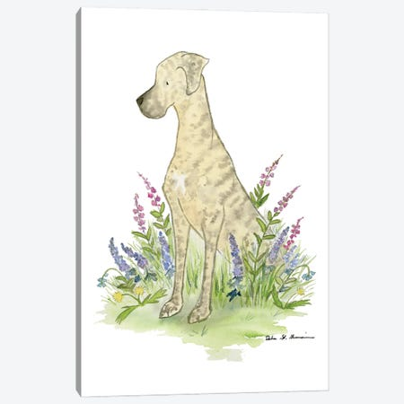 Cinder The Brindle Great Dane Canvas Print #JSY108} by Jasper And Ruby Art Print