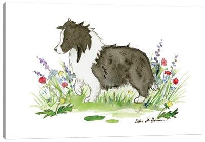 Raven The Bi Black Shetland Sheepdog Canvas Art Print