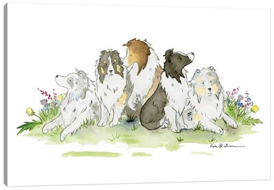 Sheltie Family Canvas Art Print