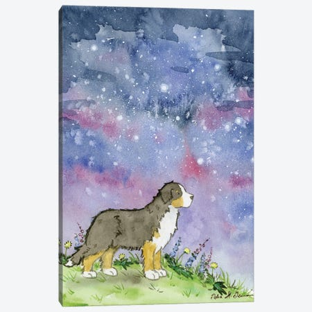 Bernese And The Starry Skies Canvas Print #JSY117} by Jasper And Ruby Canvas Print