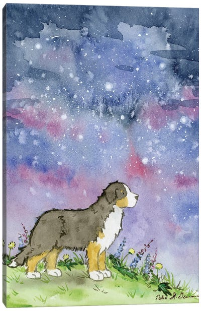 Bernese And The Starry Skies Canvas Art Print