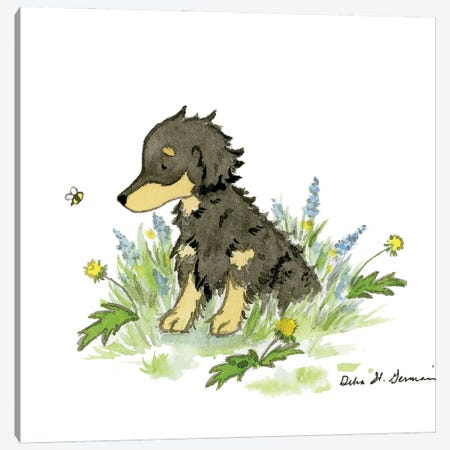 Annie The Long Haired Dachshund Canvas Print #JSY121} by Jasper And Ruby Canvas Art Print