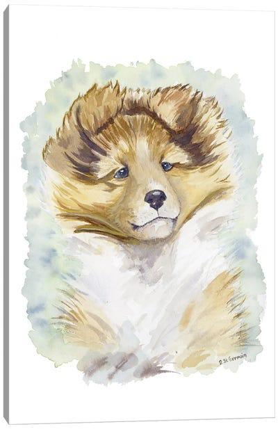 Minori The Sable Shetland Sheepdog Puppy Canvas Art Print