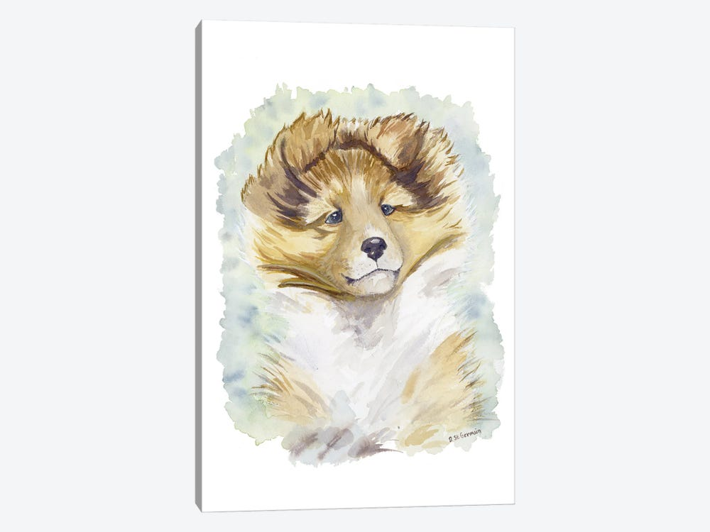 Minori The Sable Shetland Sheepdog Puppy by Jasper And Ruby 1-piece Canvas Art Print