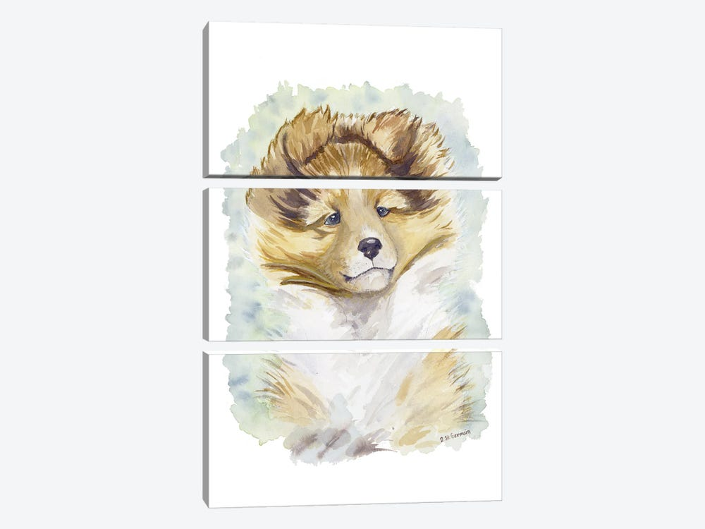 Minori The Sable Shetland Sheepdog Puppy by Jasper And Ruby 3-piece Canvas Art Print