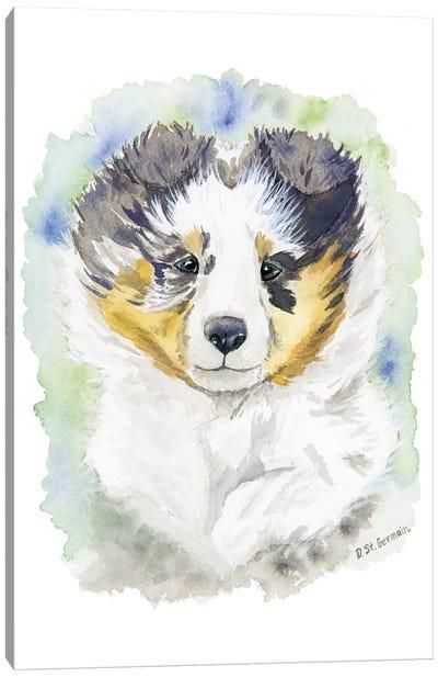 Winter The Blue Merle Shetland Sheepdog Puppy Canvas Art Print
