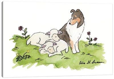 Babysitting: Tri Color Shetland Sheepdog Canvas Art Print