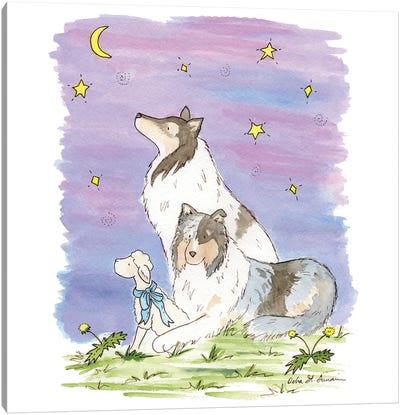 The Wishing Star: Blue Merle Collies Canvas Art Print