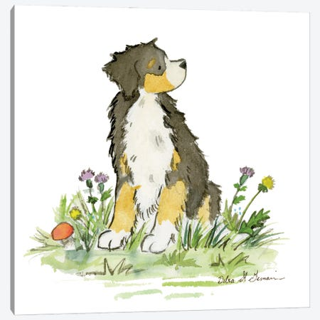 Bernese Mountain Dog Canvas Print #JSY61} by Jasper And Ruby Canvas Wall Art