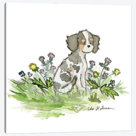 Cavalier King Charles Spaniel- Tri Color Canvas Print #JSY63} by Jasper And Ruby Canvas Artwork