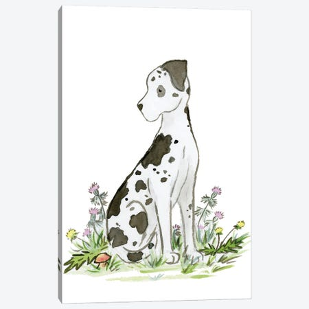 Harlequin Great Dane Canvas Print #JSY83} by Jasper And Ruby Canvas Art