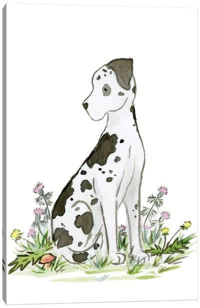 Harlequin Great Dane Canvas Art Print