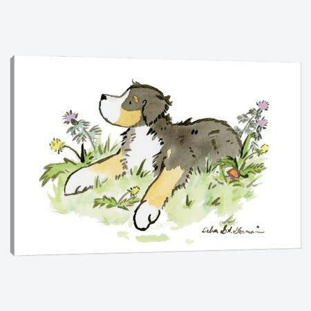 Bernese Mountain Dog II Canvas Print #JSY86} by Jasper And Ruby Art Print