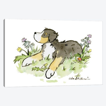 Bernese Mountain Dog II Canvas Print #JSY86} by Jasper And Ruby Art Print