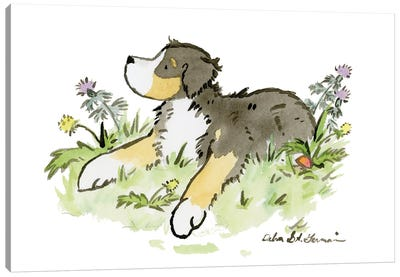 Bernese Mountain Dog II Canvas Art Print