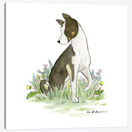 Bachrach The Husky-Collie Mix Canvas Print #JSY91} by Jasper And Ruby Art Print