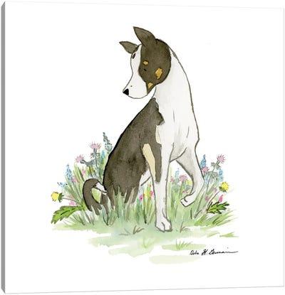 Bachrach The Husky-Collie Mix Canvas Art Print
