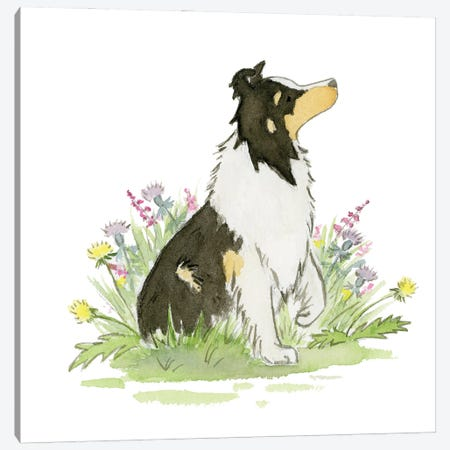 Skip The Shetland Sheepdog Canvas Print #JSY94} by Jasper And Ruby Canvas Artwork