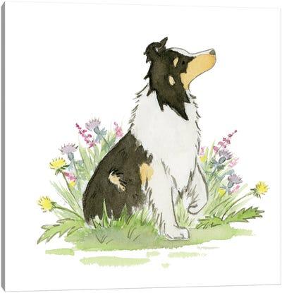 Skip The Shetland Sheepdog Canvas Art Print