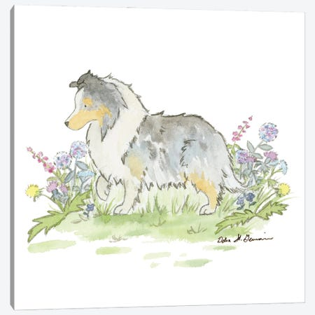 Fable The Blue Merle Shetland Sheepdog Canvas Print #JSY96} by Jasper And Ruby Canvas Wall Art