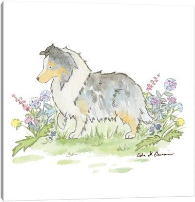 Fable The Blue Merle Shetland Sheepdog Canvas Art Print