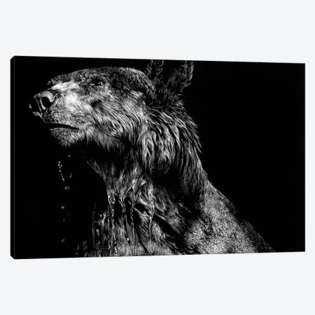 Ursa Major Canvas Print #JTC100} by Julie T. Chapman Canvas Artwork