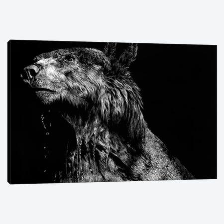 Ursa Major Canvas Print #JTC100} by Julie T. Chapman Canvas Artwork