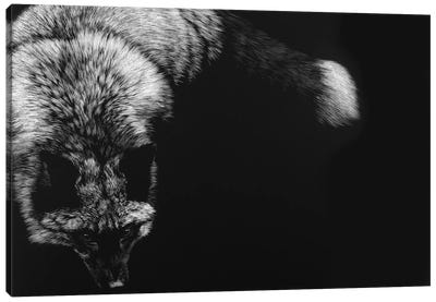 Wild Scratchboard III Canvas Art Print
