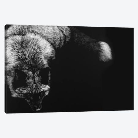 Wild Scratchboard III Canvas Print #JTC111} by Julie T. Chapman Canvas Print