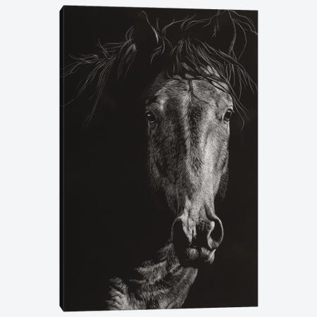 Wild Scratchboard VI Canvas Print #JTC114} by Julie T. Chapman Canvas Artwork