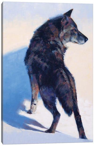 Wolf Study I Canvas Art Print