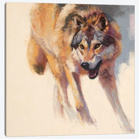 Wolf Study IV Canvas Print #JTC118} by Julie T. Chapman Canvas Art Print