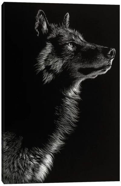 Wolf II Canvas Art Print