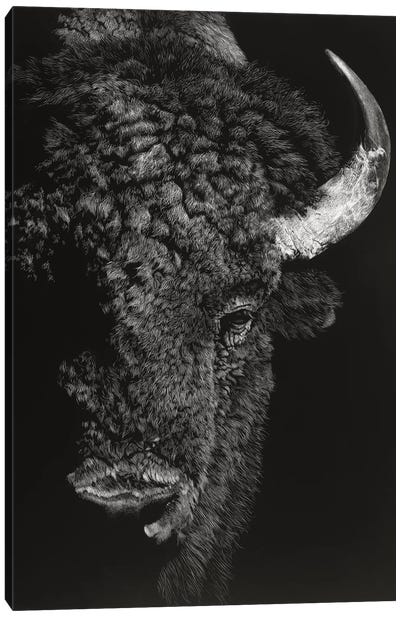 Black Glimpse I Canvas Art Print