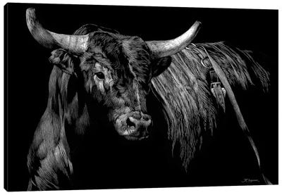 Brindle Rodeo Bull Canvas Art Print