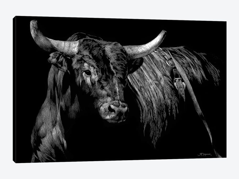 Brindle Rodeo Bull by Julie T. Chapman 1-piece Canvas Art Print