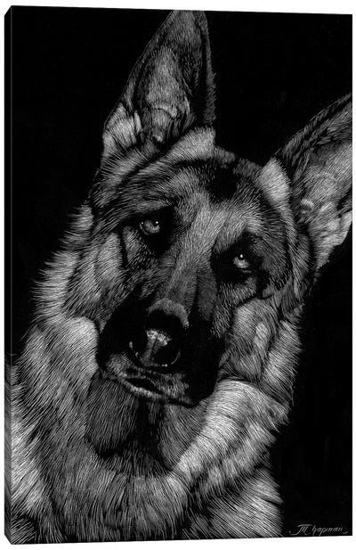Canine Scratchboard II Canvas Art Print