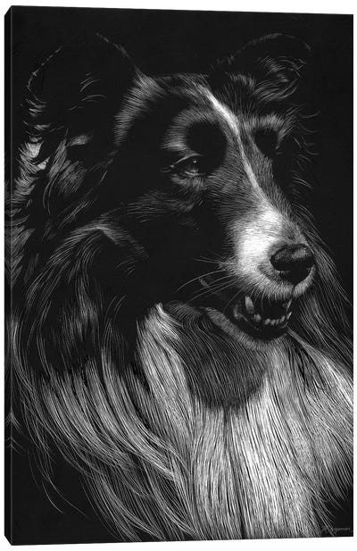 Canine Scratchboard VII Canvas Art Print