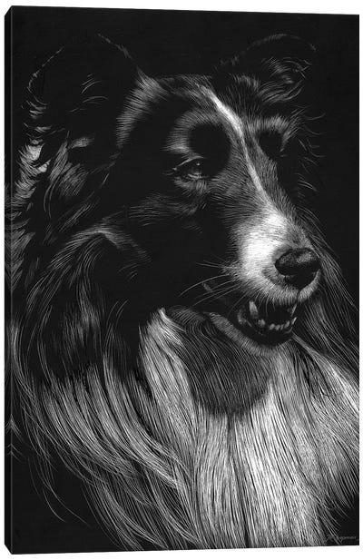 Canine Scratchboard VII Canvas Art Print
