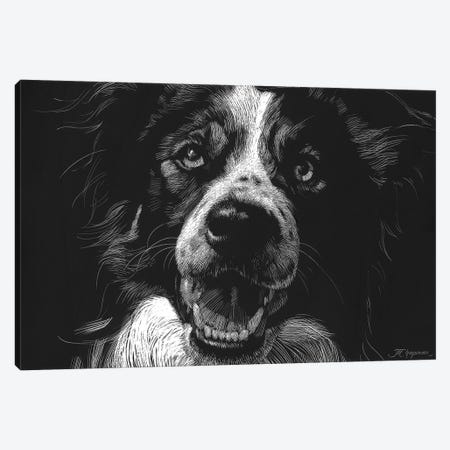 Canine Scratchboard XVIII Canvas Print #JTC64} by Julie T. Chapman Canvas Artwork