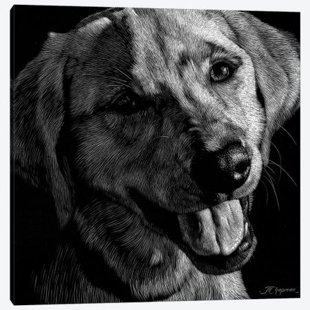 Canine Scratchboard XXIII Canvas Print #JTC66} by Julie T. Chapman Canvas Artwork