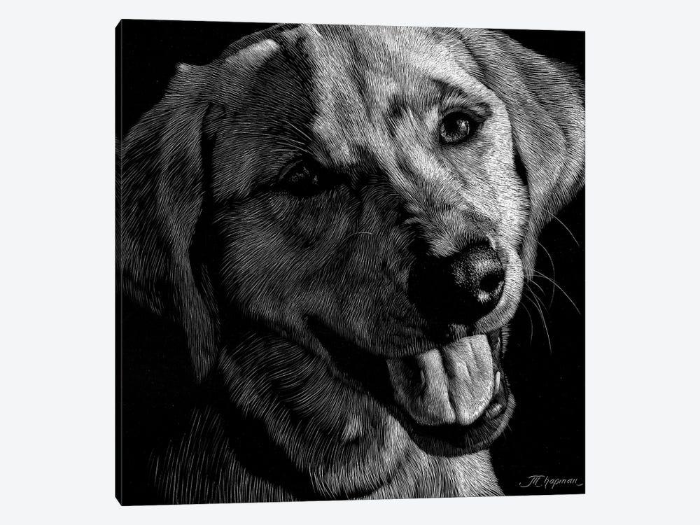 Canine Scratchboard XXIII by Julie T. Chapman 1-piece Art Print