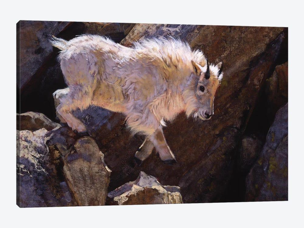 Rockhopper by Julie T. Chapman 1-piece Canvas Wall Art
