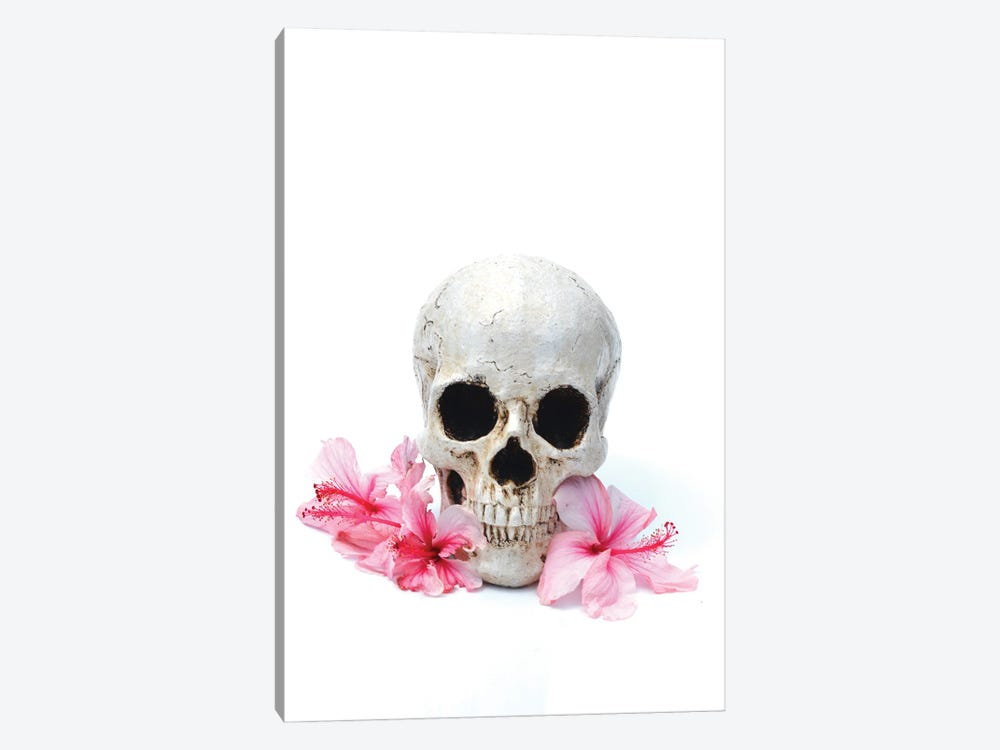 Skull & Pink Hibiscus by Jonathan Brooks 1-piece Canvas Artwork