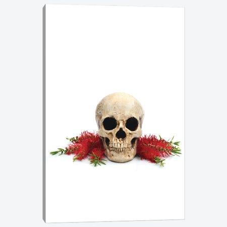 Skull & Bottlebrush Canvas Print #JTN112} by Jonathan Brooks Canvas Art