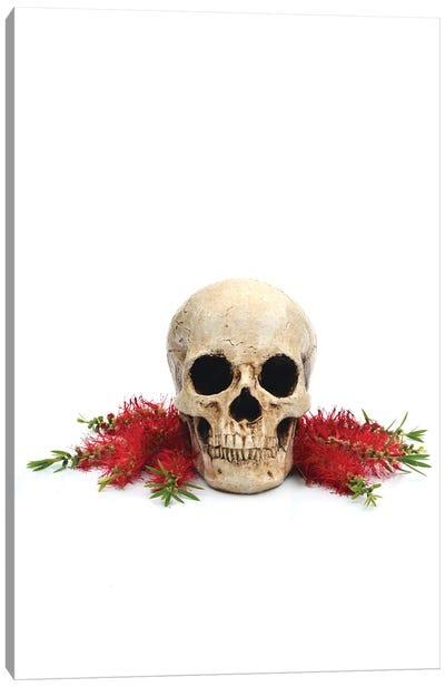 Skull & Bottlebrush Canvas Art Print