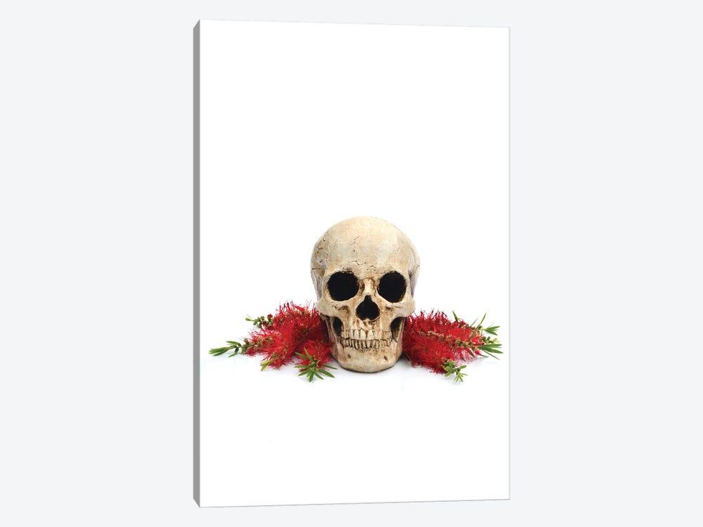 Skull & Bottlebrush by Jonathan Brooks 1-piece Art Print